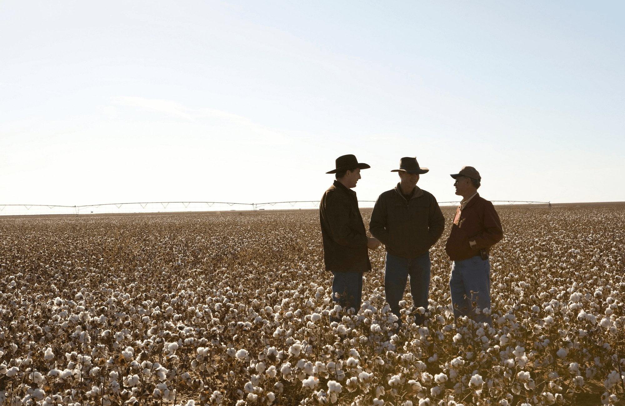 美國棉花 Cotton USA